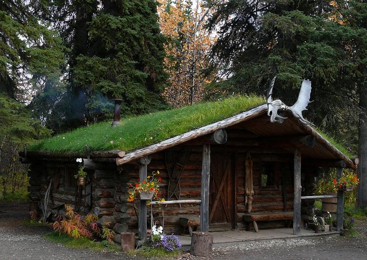 chalets en rondins de bois avec toiture deux pans en pente douce avec végétalisation, grands arbres à l'arrière plan