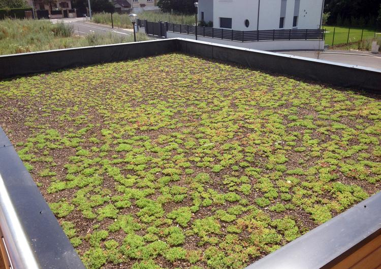 vue d'une toiture plate rectangulaire avec jeune végétalisation à la fin du chantier, à l'arrière plan un zone residentielle.