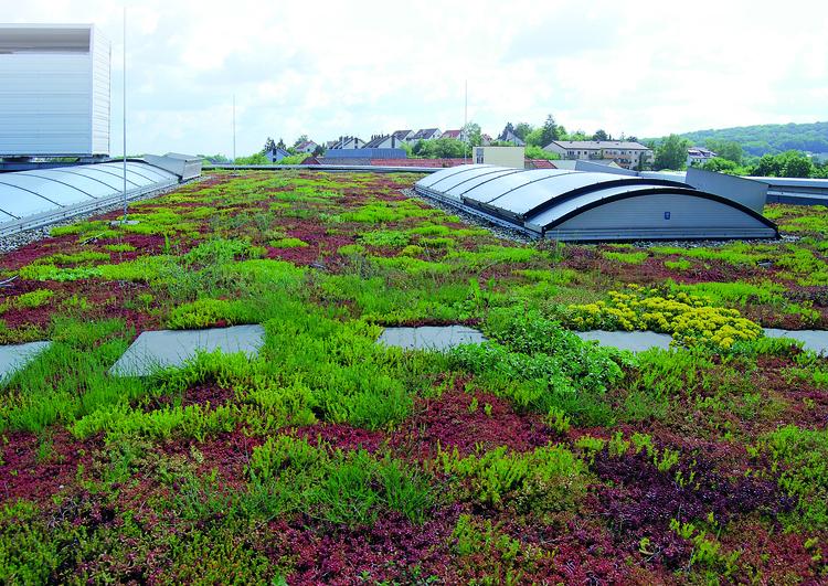 grande toiture plate avec végétalisation et puits de lumières, à l'arrière plan une zone résidentielle avec des arbres.