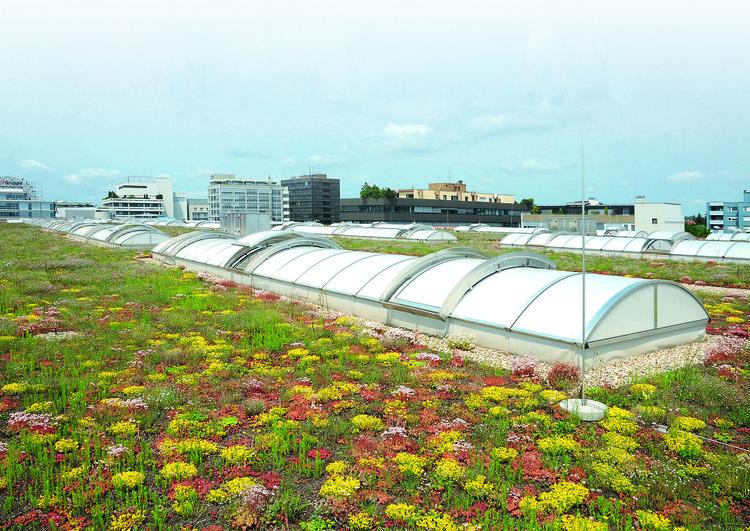 grande toiture plate avec végétalisation et puits de lumières, à l'arrière plan de grands immeubles en zone urbaine.