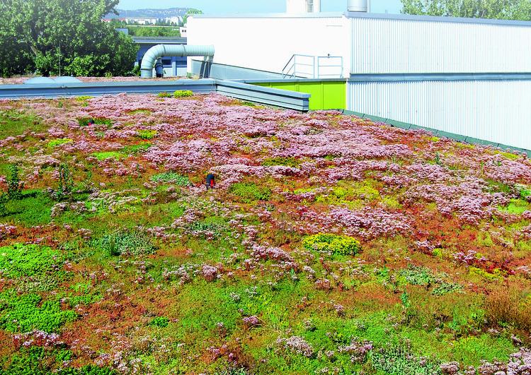 toiture plate végétalisée d'un bâtiment industriel avec un bardage en tôle et des conduits de ventilation. à l'arrière plan des arbres