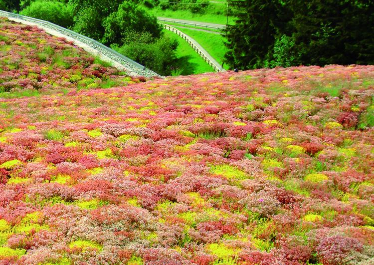 au premier plan la végétalisation d'une toiture avec différentes variétés de sedum dans différents tons de verts, roses, rouges et jaunes, à l'arrière plan des arbres et de l'herbe.