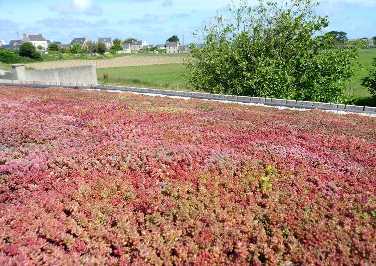 toiture végétalisée au premier plan, avec un champ derrière et un village tout au fond sur la ligne d'horizon.