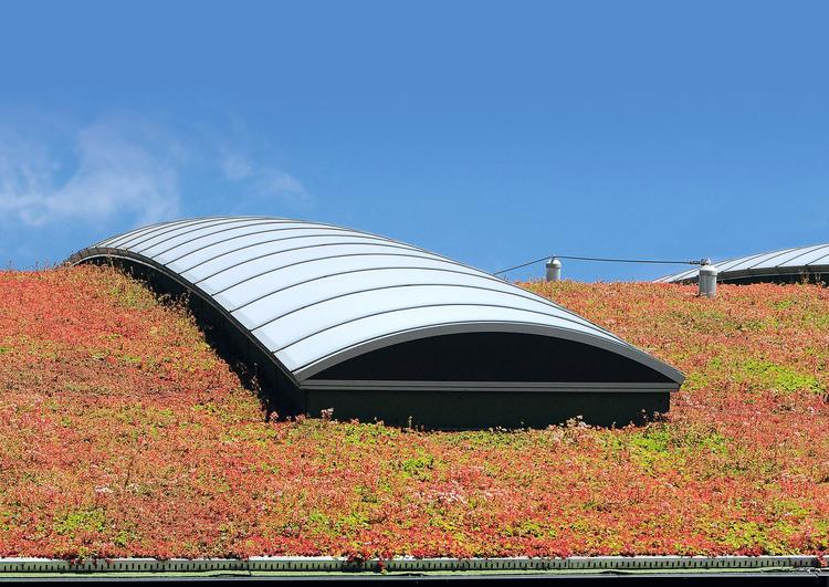 vue en contre-plongée sur un toit végétalisé avec puit de lumière.
